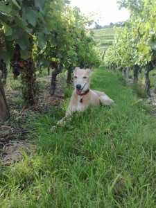 Relaxing in the vines